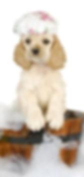 groomdog2_edited.jpg