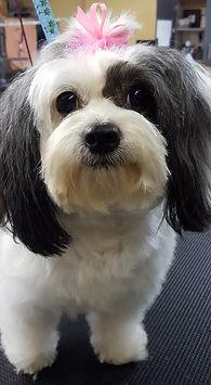 pet grooming, dog grooming, cat grooming, John Gagnon's Pet Resort, Pet Grooming Mat Removal, Pet Nail Trim, Dog Nail Trim, Cat Nail Trim, Dog Ear Cleaning & Grooming, Cat Ear Cleaning & Grooming