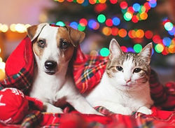 Cat-Dog-Christmas John Gagnon's Pet Resort Blog