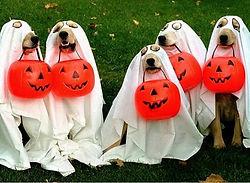 halloween dogs.jpg