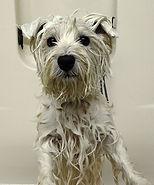 John Gagnon's Pet Resort, Dog Getting Goomed, Dog getting a bath
