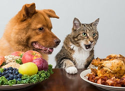 thanksgiving-foods-for-pets.jpg