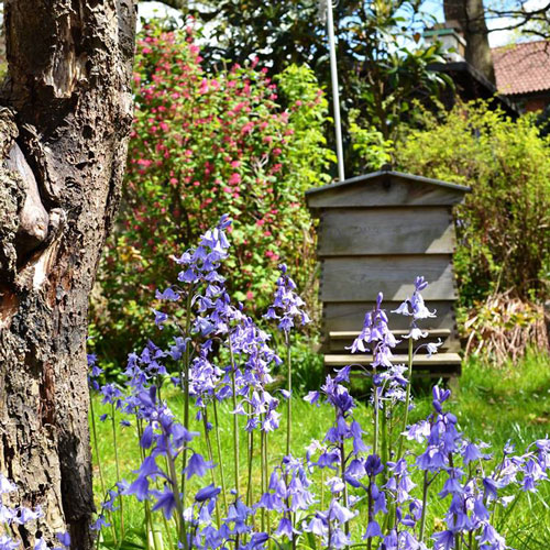 Bluebell hive