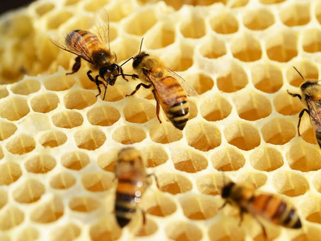 Beeswax in skincare
