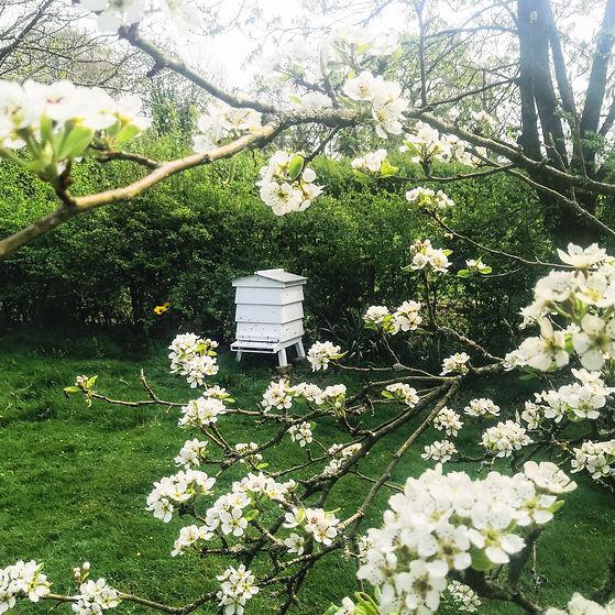 Beekeeping in spring - WBC hive