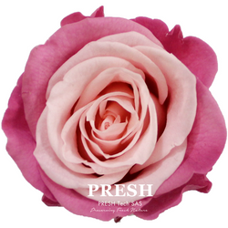 Pink - Bourgogne