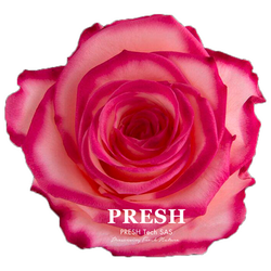 Peach - Burgundy