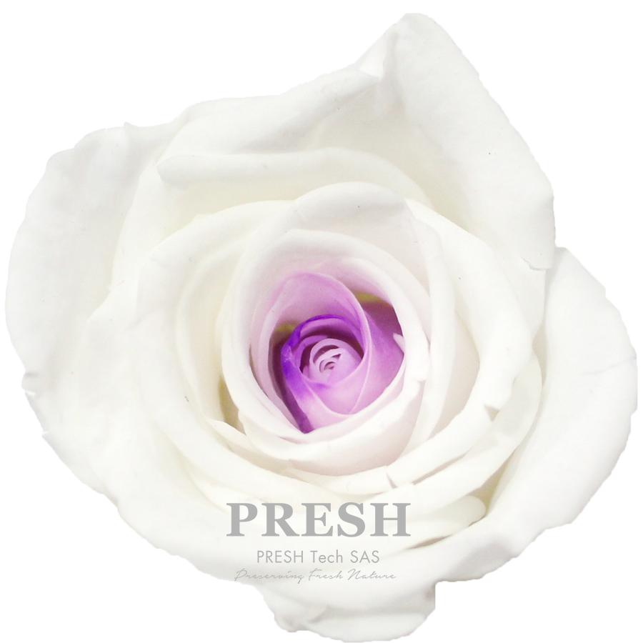 Blanc - Lilac