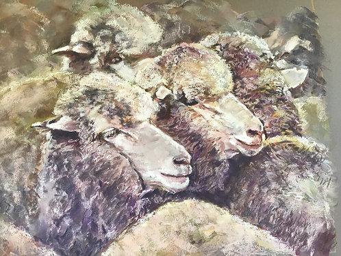 Woolgrowers
