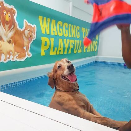 papi swimming.jpg