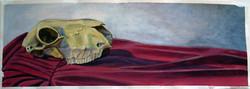 Skull on Red Drapery