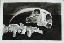 Skull and Vertebrae
