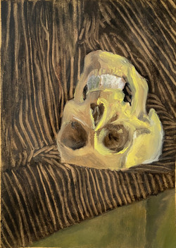 Still Life with Skull and Drapery