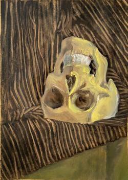 Still Life with Skull and Drapery