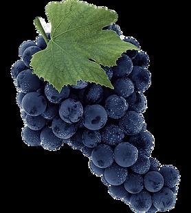 png-transparent-common-grape-vine-sultana-seedless-fruit-grape-food-blueberry-grape_edited
