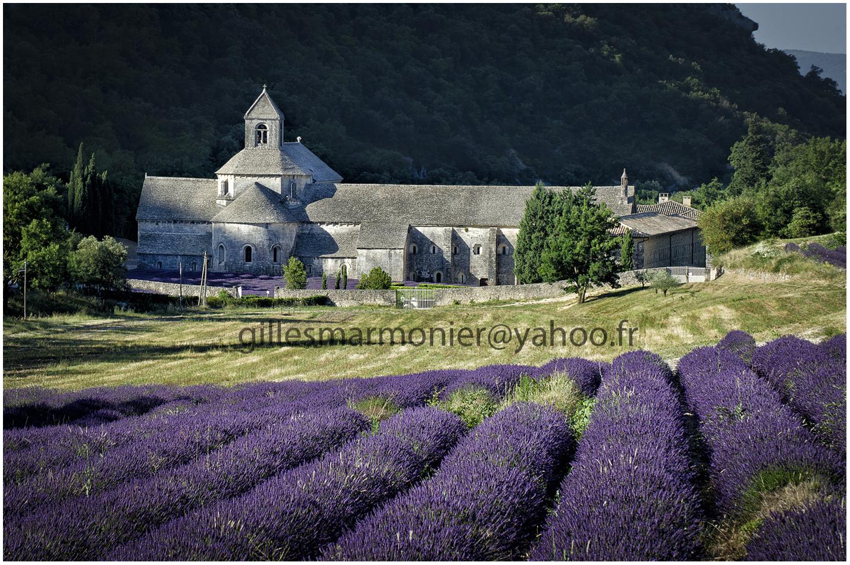 abbaye de senanque,Luberon