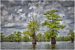 Louisiane5