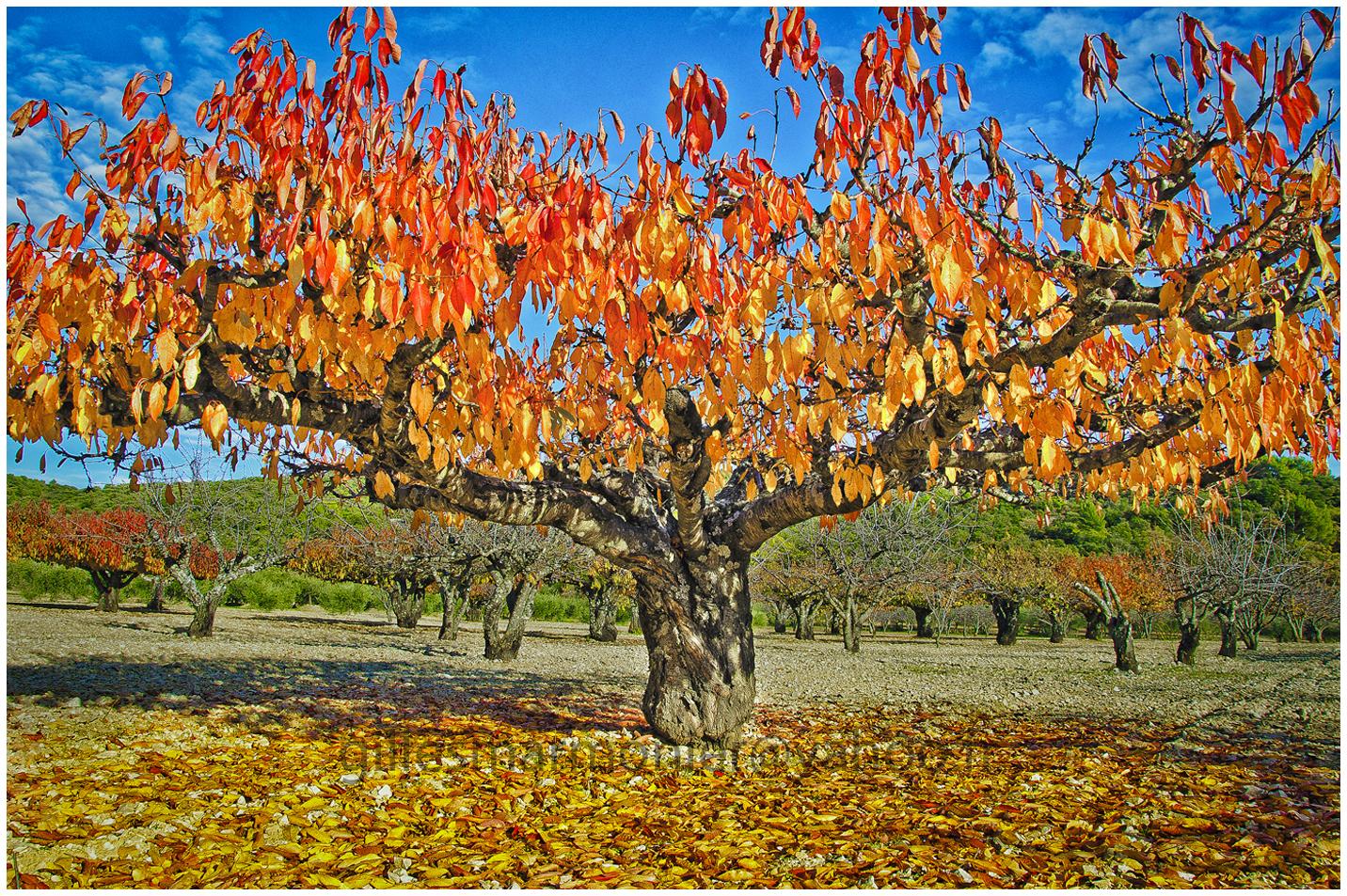 automne1,Luberon