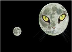 le chat lune