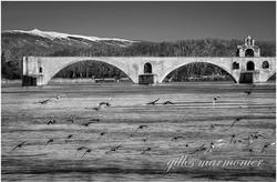 Pont Avignon 5