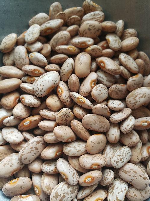 Organic Pinto Beans