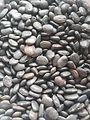 Black Tepary Beans.jpg