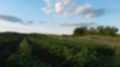 FieldShot.jpg