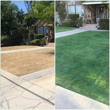 Nature's Lawn Care Organic Lawn Colorant