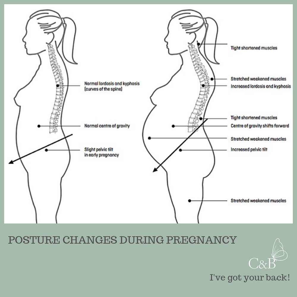 back and pelvis in pregnancy