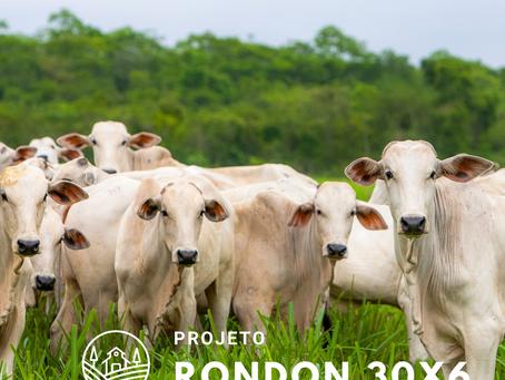 Gostei da rentabilidade, mas...  Investir em gado é seguro?