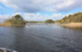 snoekvissen voorjaar in Ierland