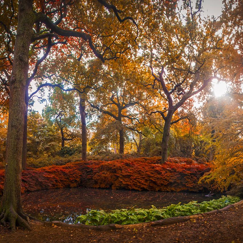 Still Pond, Isabella Plantation