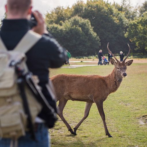 We were shooting another stag (to the left of us in this photo) when we heard this guy walking behind us across the path.