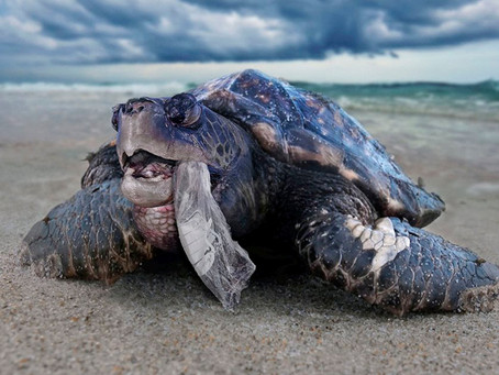 Sixty Percent of Ocean's Plastic Comes from Five Asian Countries