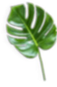 260-2601843_the-banana-leaf-transparent-