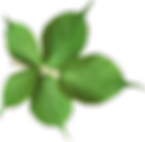 green-leaf-png-hd-photo-24.png