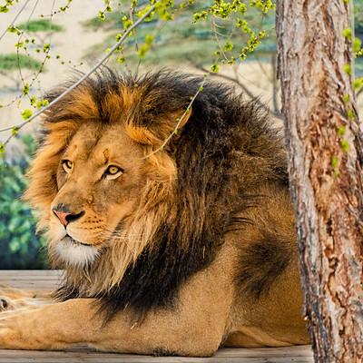 Animals/Wildlife