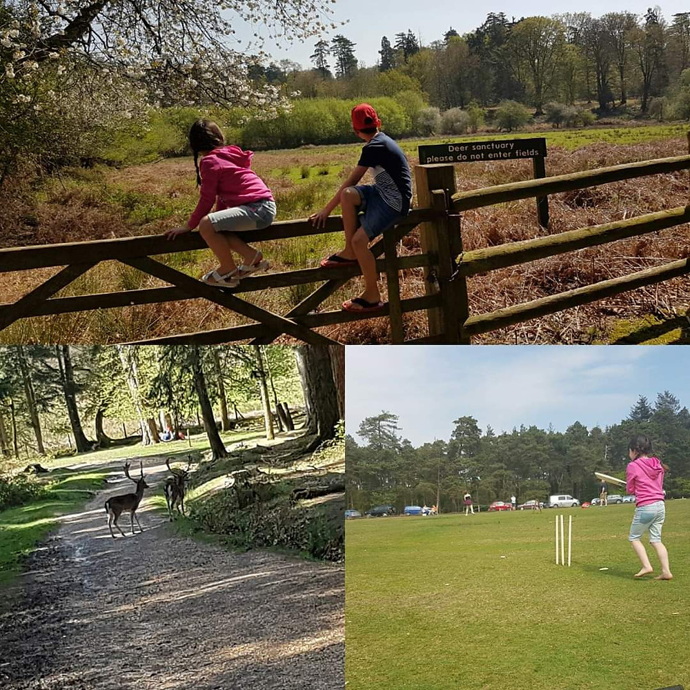 New Forest Bolderwood / outdoor days with kids / free