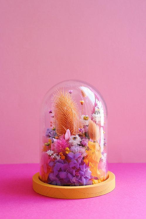 Grande Mangue violette