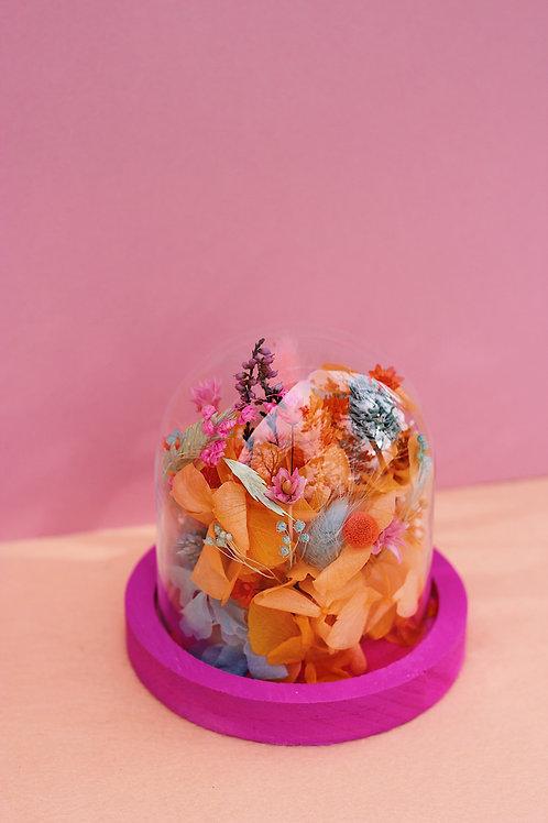 Petite cloche Pamplemousse rose