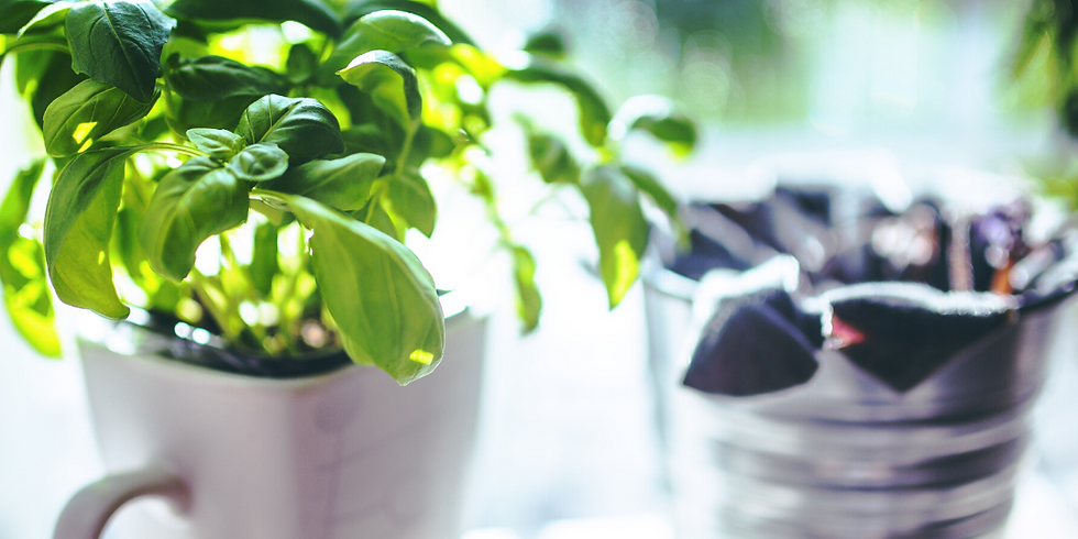 How to Grow Herbs in your Apartment