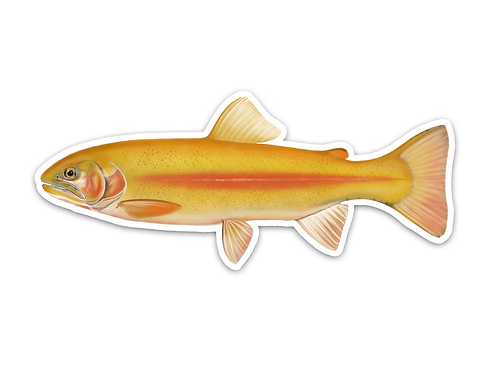 Golden Rainbow Trout - Waterproof Sticker