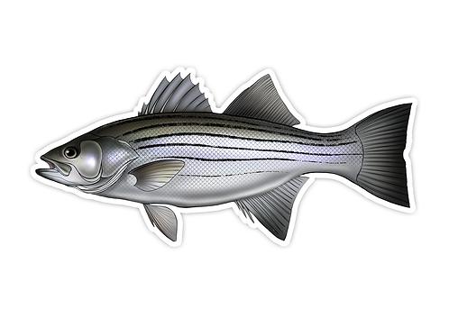 Striped Bass - Waterproof Sticker