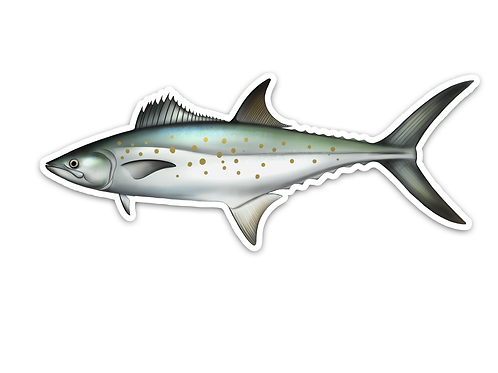 Spanish Mackerel - Waterproof Sticker
