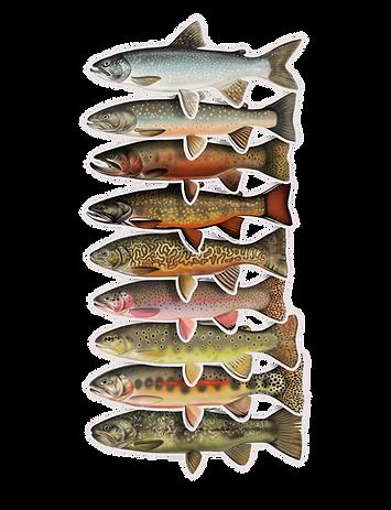 Trout Waterproof Sticker - Set 15% OFF