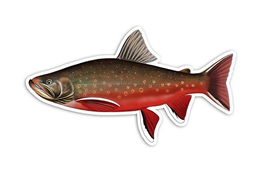 Arctic Char (Male) - Waterproof Sticker
