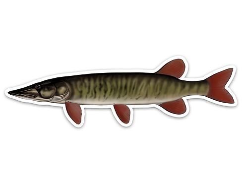 Redfin Pickerel- Waterproof Sticker