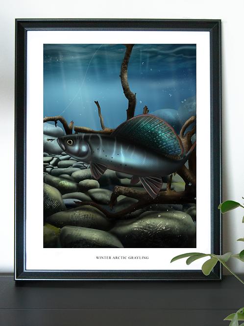 Winter Arctic Grayling - Poster
