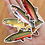 Thumbnail: Trout - Magnets