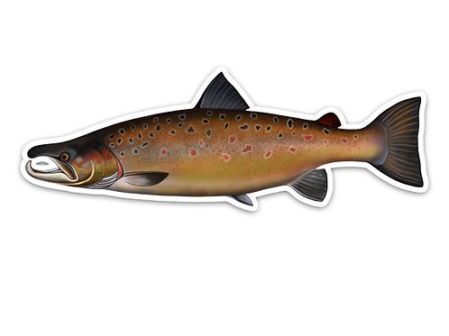 Atlantic Salmon - Waterproof Sticker